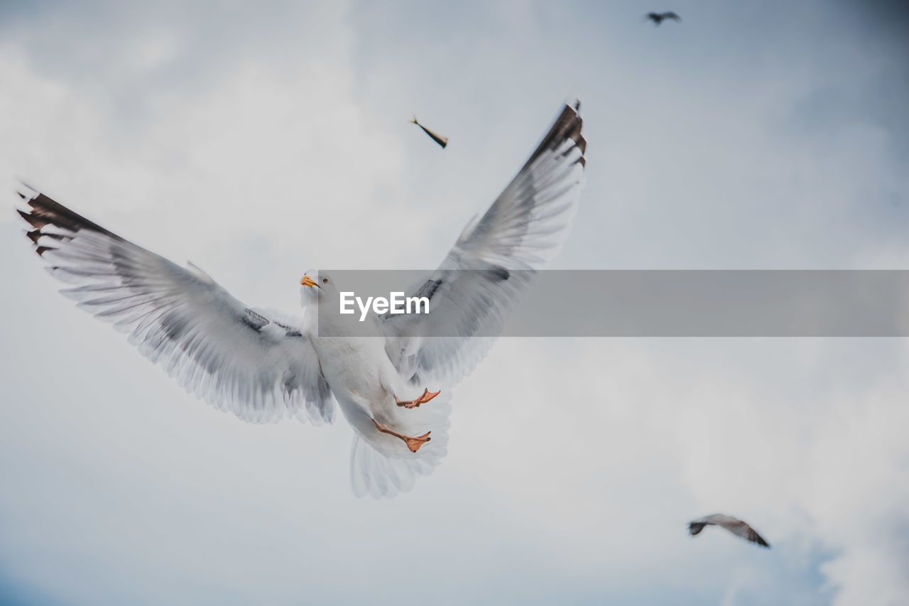 bird, animals in the wild, animal, animal themes, animal wildlife, flying, vertebrate, spread wings, mid-air, motion, low angle view, sky, seagull, group of animals, no people, nature, day, white color, two animals, outdoors, flapping