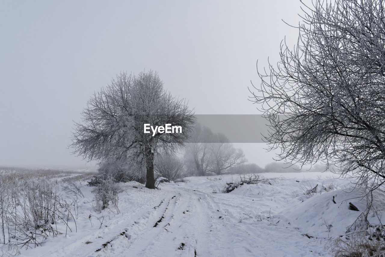 snow, winter, cold temperature, nature, tranquility, beauty in nature, tree, bare tree, tranquil scene, clear sky, no people, scenics, outdoors, landscape, day, branch, sky