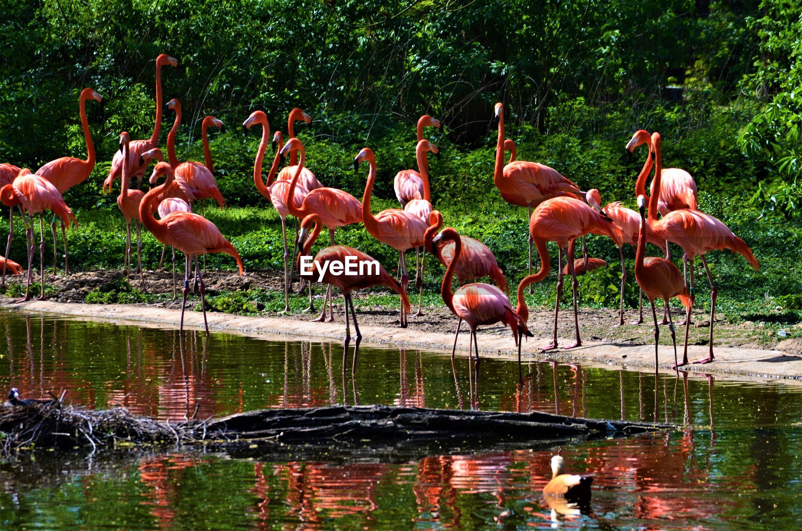 GROUP OF BIRDS ON LAKE