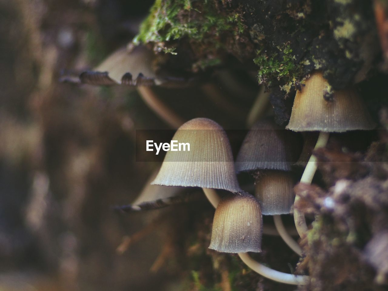 mushroom, growth, fungus, plant, vegetable, close-up, no people, tree, beauty in nature, toadstool, nature, food, day, land, vulnerability, forest, fragility, selective focus, focus on foreground, outdoors