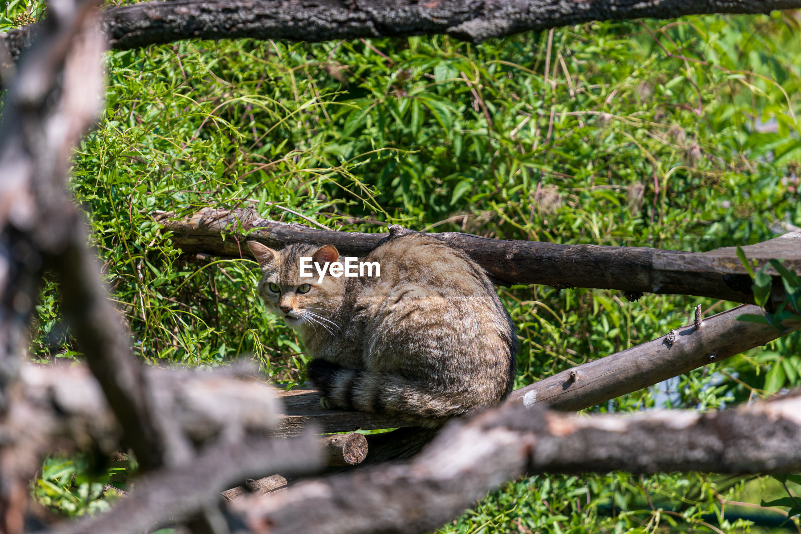 VIEW OF A CAT SITTING ON TREE