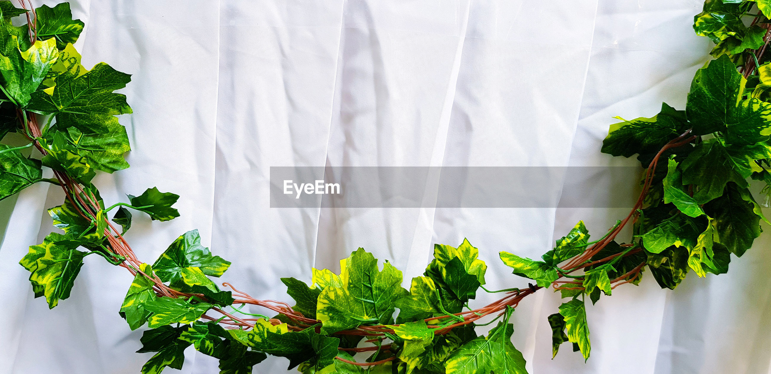 Close-up of potted plant on white curtain background