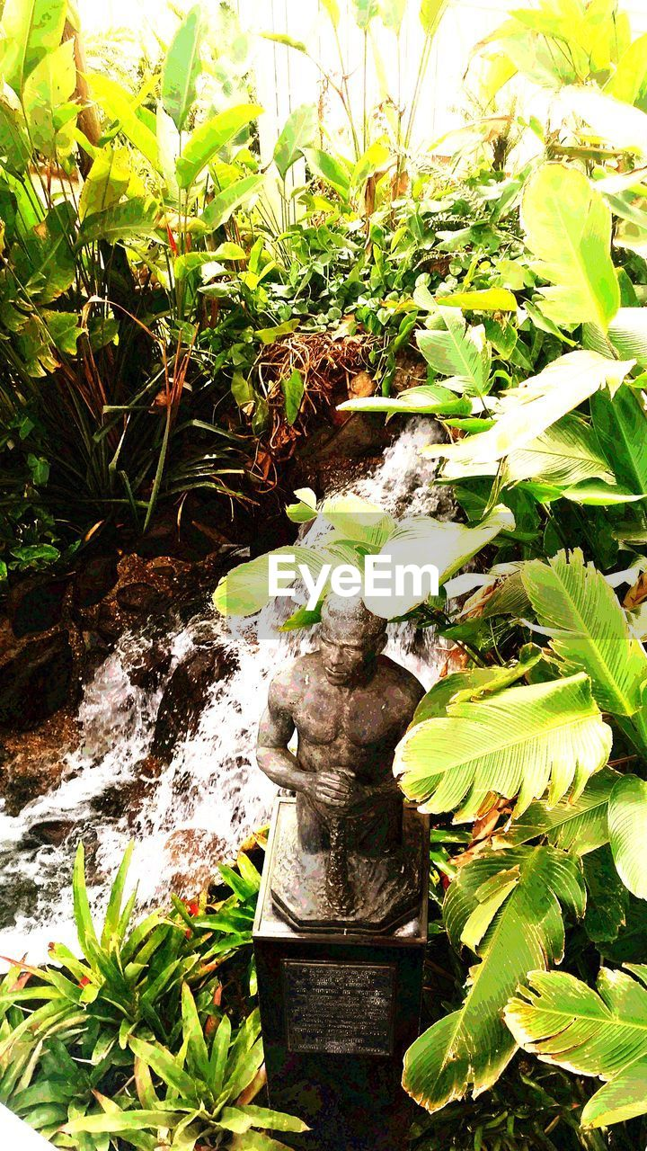 plant, leaf, growth, nature, no people, water, green color, day, high angle view, outdoors, beauty in nature, close-up