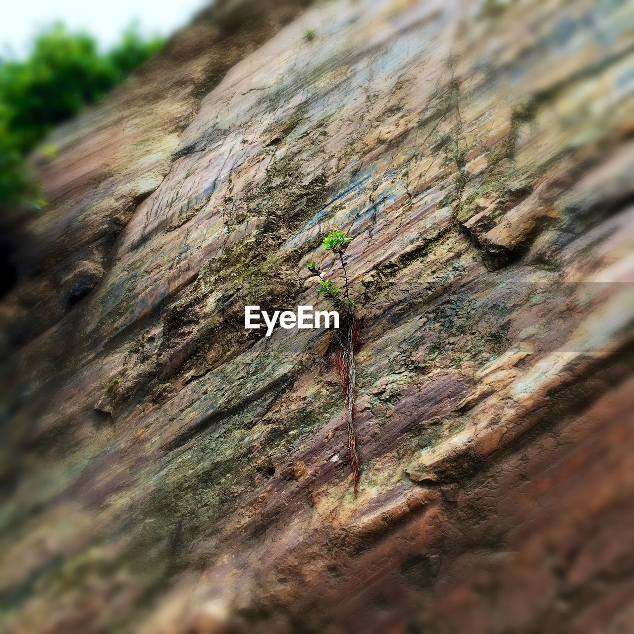Low angle view of small plant growing on rock