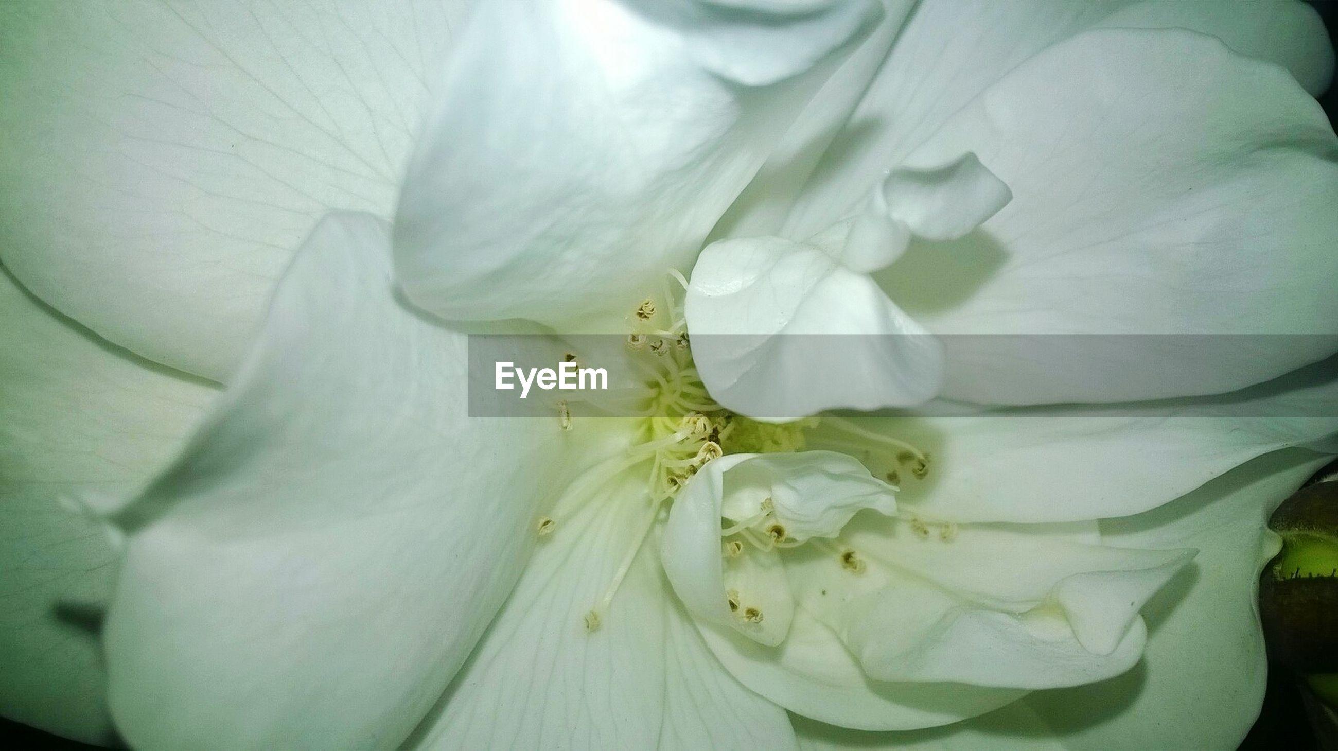 Full frame shot of white flower in park
