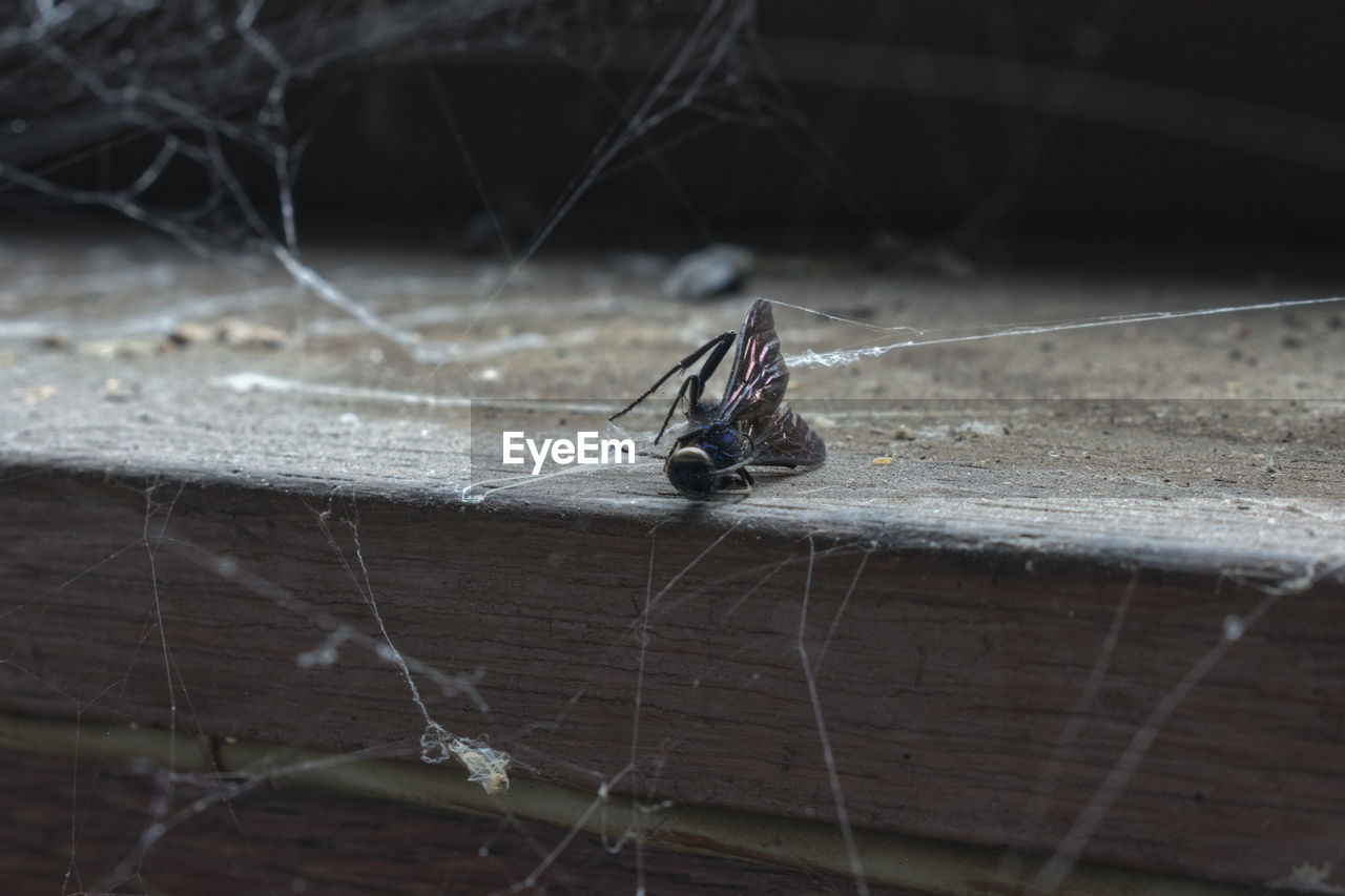insect, spider web, spider, animal themes, close-up, animals in the wild, one animal, focus on foreground, no people, animal wildlife, web, outdoors, day, nature