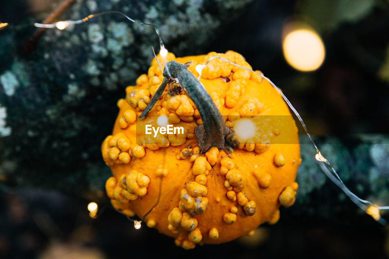 Close-up of pumpkin on illuminated tree during halloween