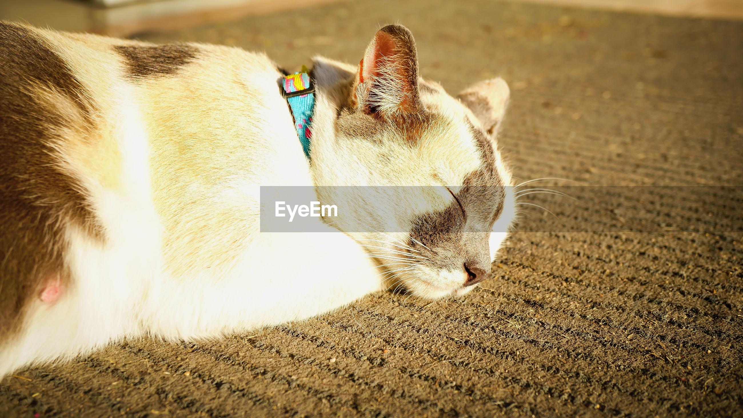 Close-up of cat sleeping on carpet