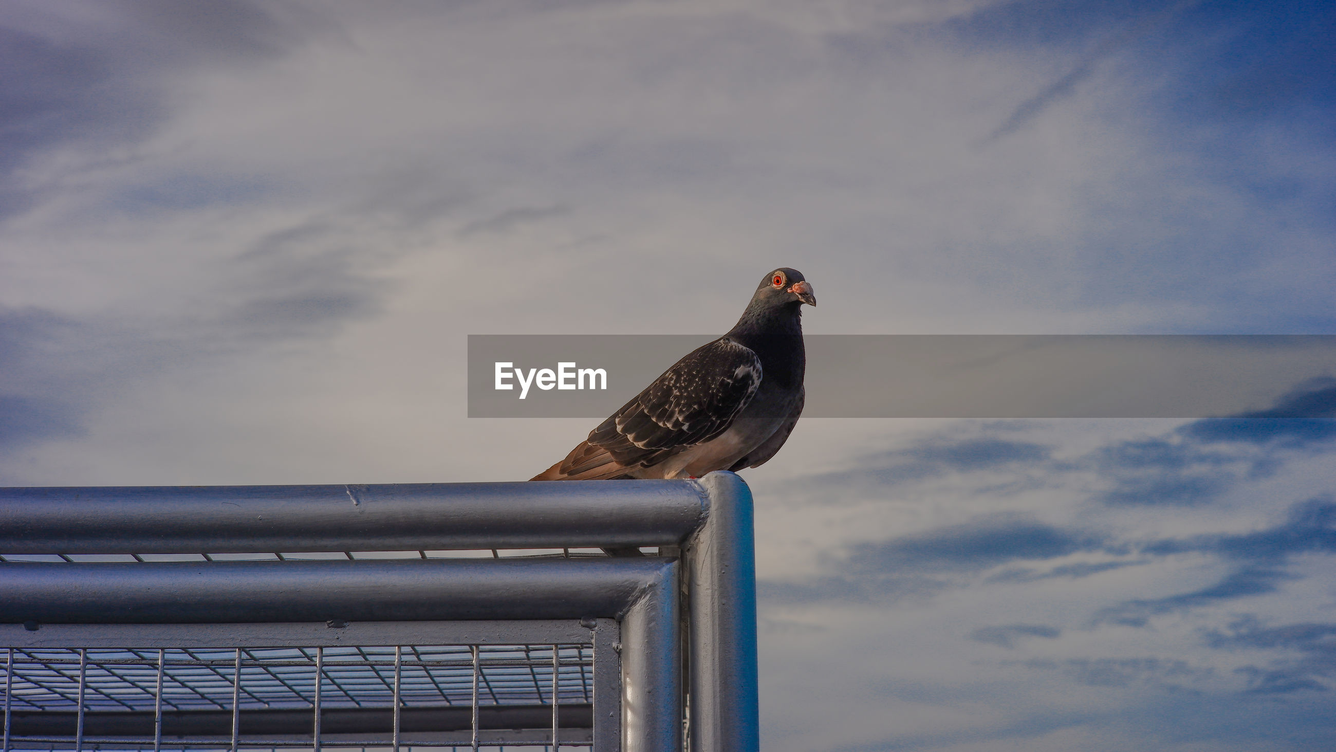 BIRD PERCHING ON RAILING AGAINST SKY