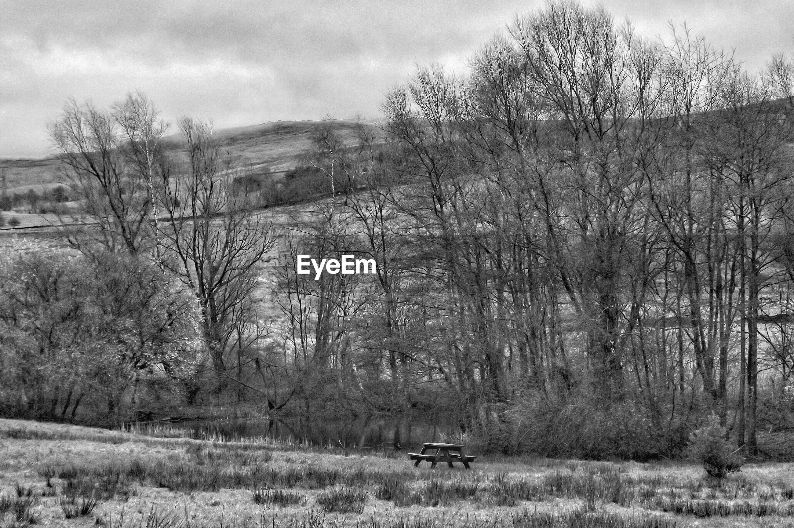 Bare trees on landscape against cloudy sky
