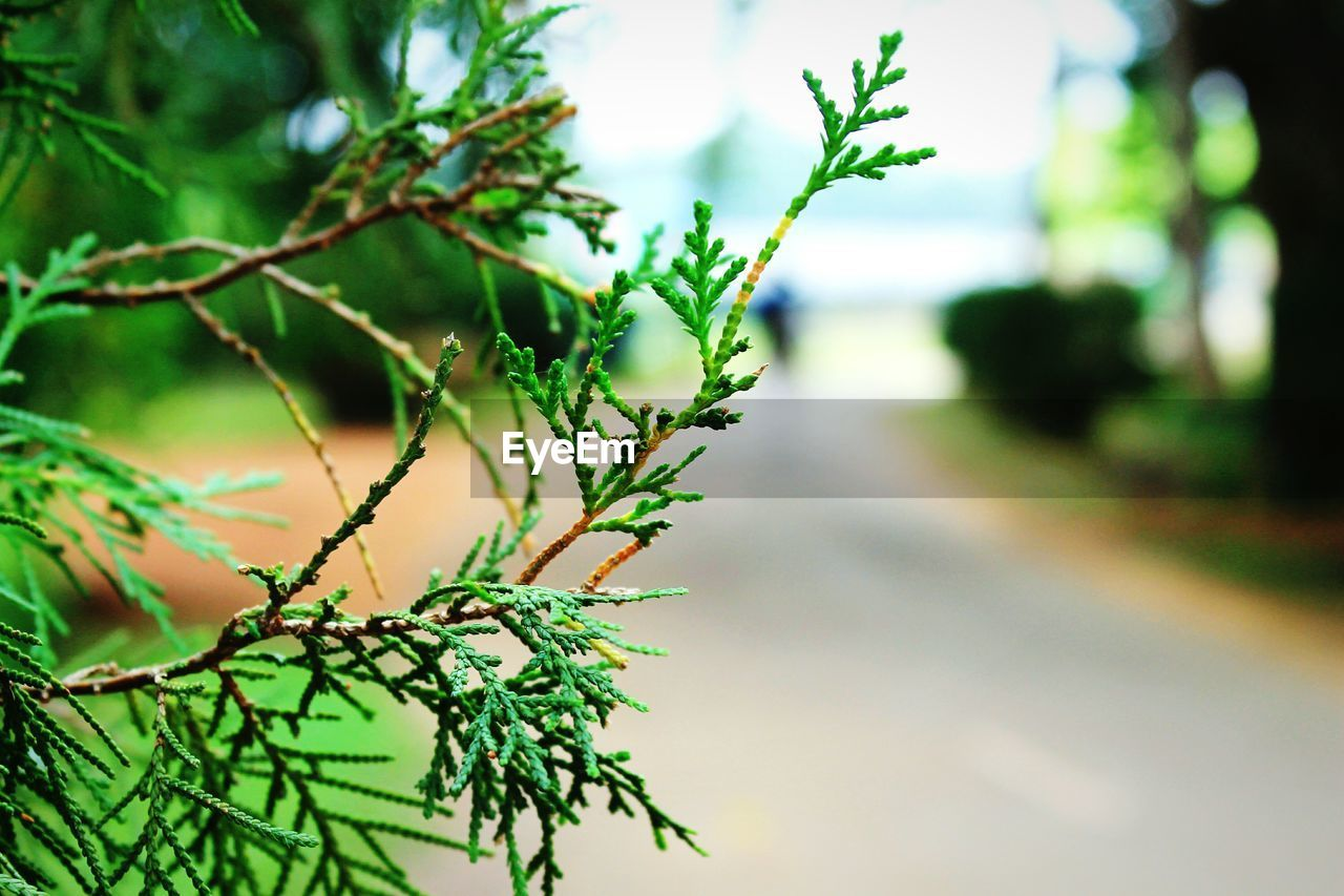 plant, growth, nature, green color, focus on foreground, outdoors, no people, beauty in nature, day, tree, close-up, leaf, branch, fragility, freshness, sky