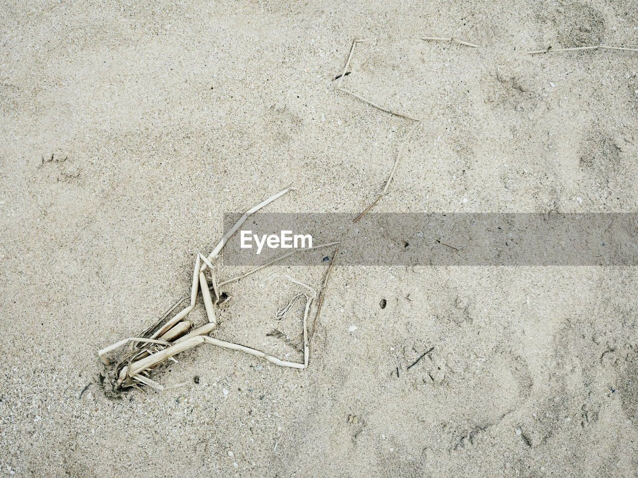no people, high angle view, day, outdoors, sand, nature, animal themes, close-up