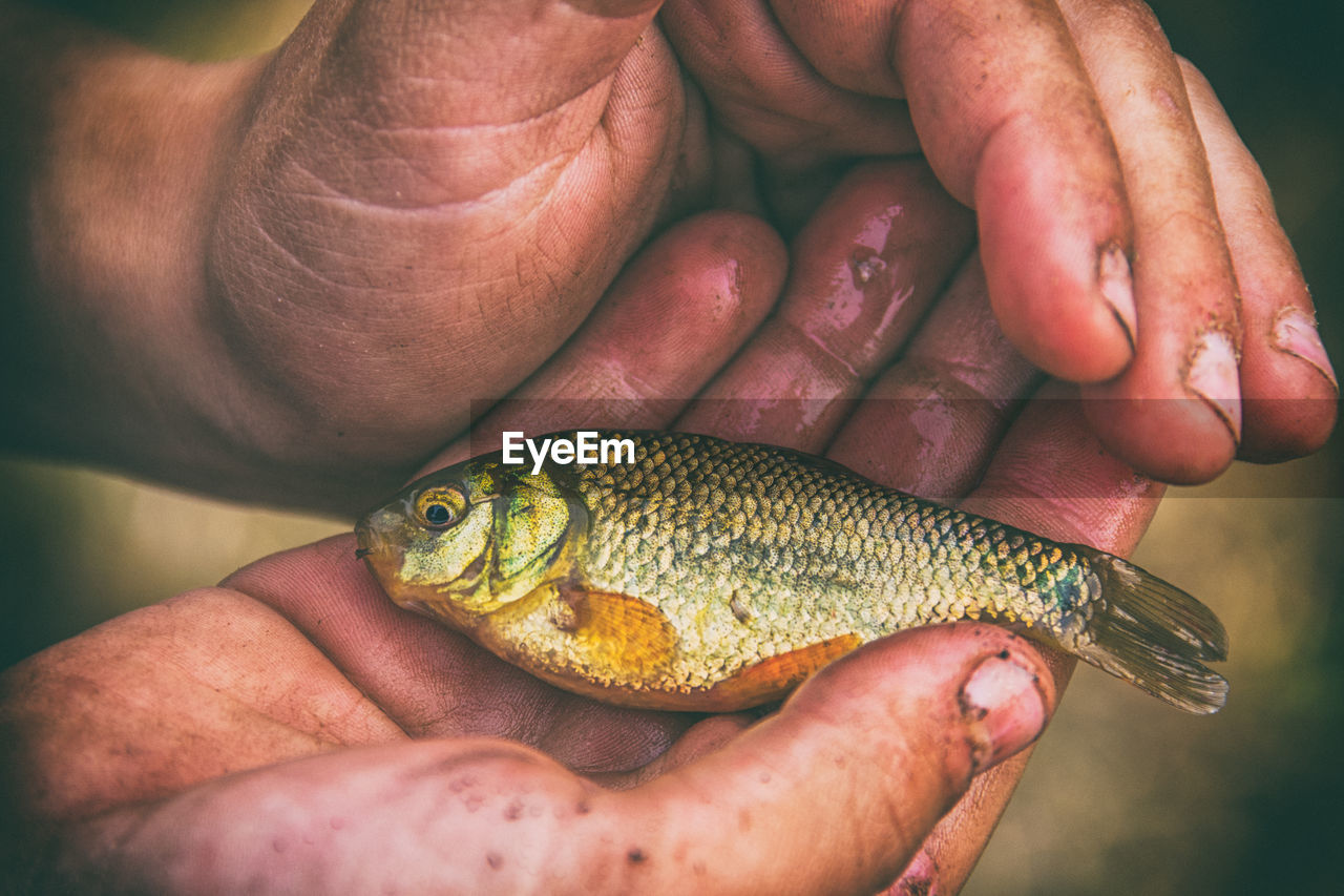 Cropped Image Of Person Holding Fish