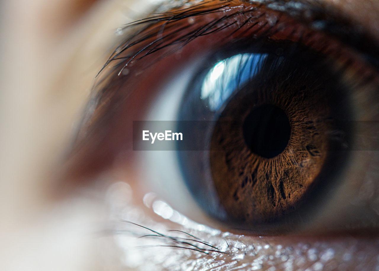 eye, eyesight, extreme close-up, sensory perception, eyelash, human eye, body part, iris - eye, close-up, macro, eyeball, human body part, one person, unrecognizable person, brown eyes, selective focus, looking, young adult, women, eyelid, eyebrow, hazel eyes, beautiful woman
