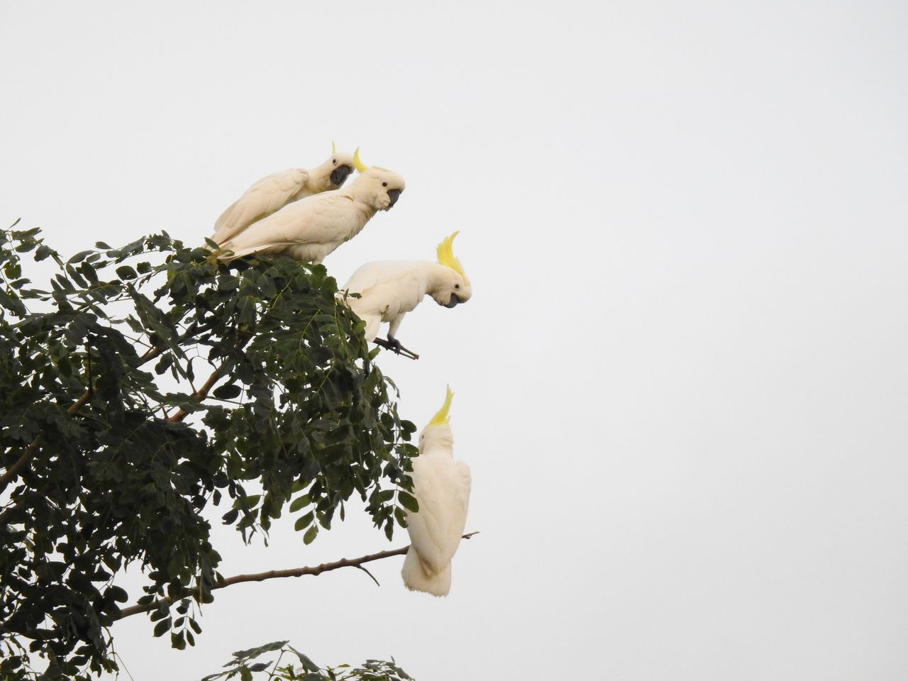 plant, tree, copy space, no people, animal, sky, animal themes, vertebrate, nature, clear sky, branch, growth, low angle view, animal wildlife, white color, one animal, plant part, leaf, bird, studio shot, outdoors