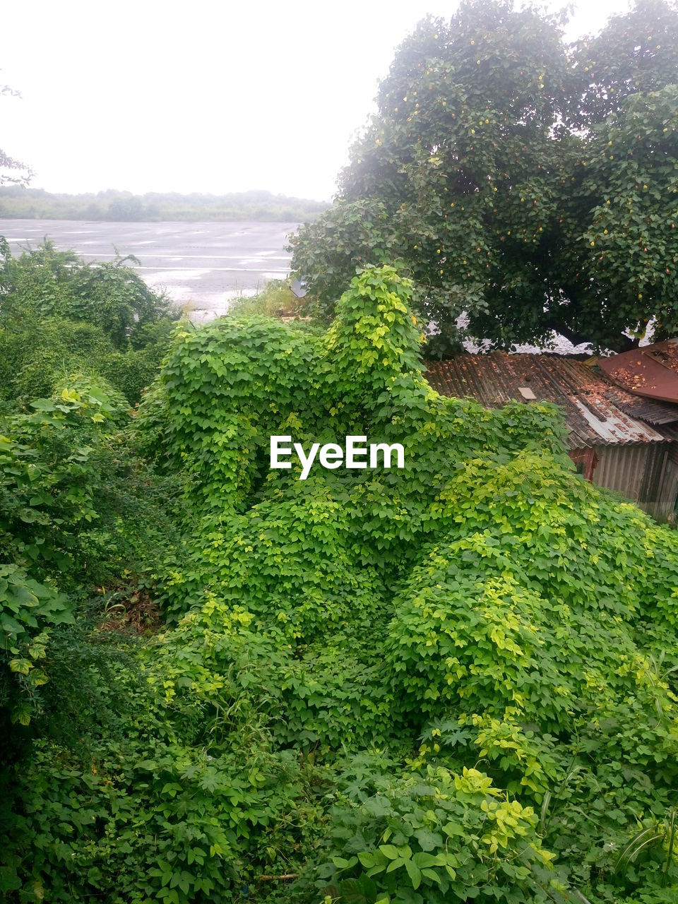 growth, green color, tree, nature, no people, plant, day, outdoors, beauty in nature, scenics, water, freshness