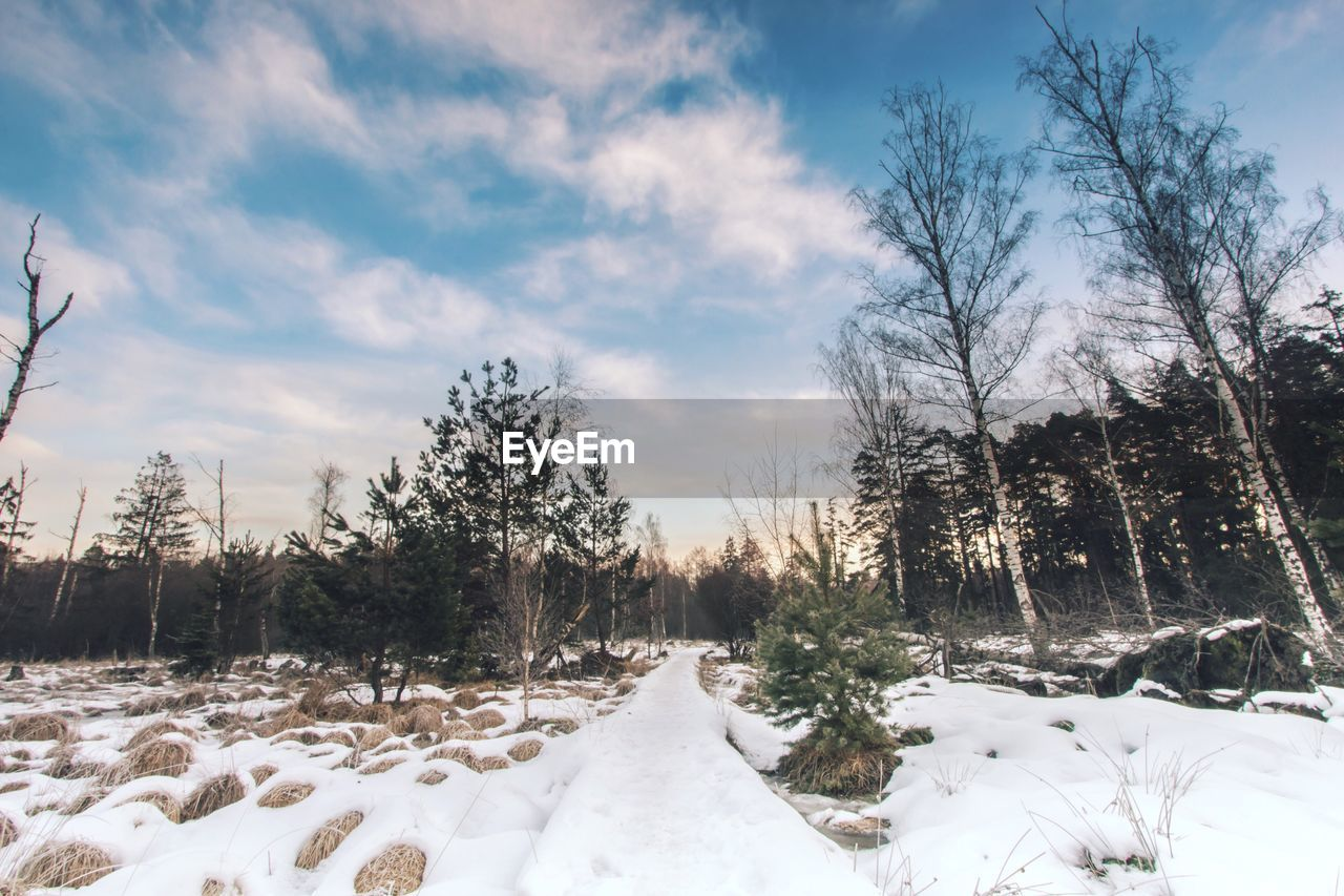 Trees on snow covered landscape against cloudy sky