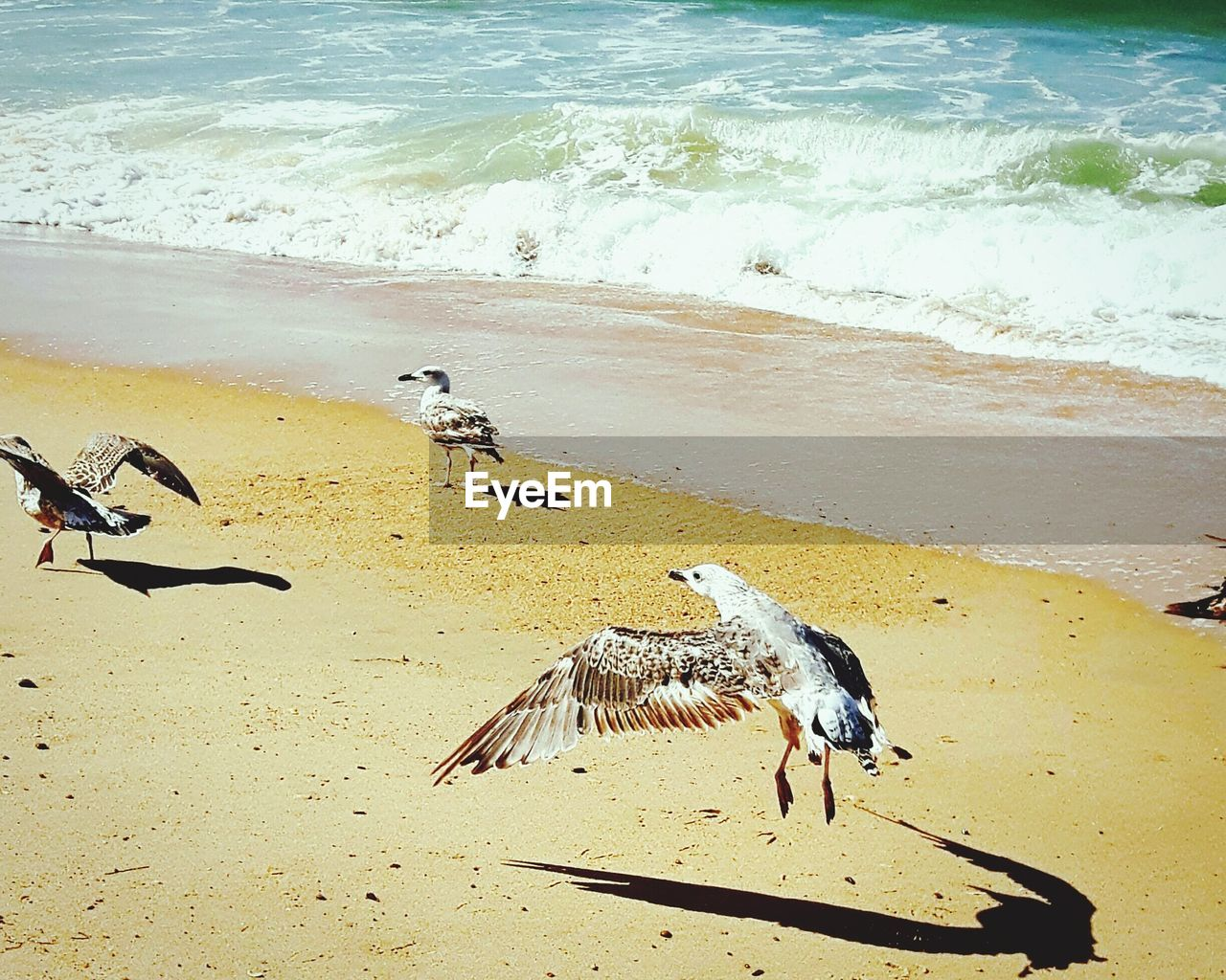 beach, sand, bird, animal themes, animals in the wild, sea, water, nature, shore, animal wildlife, outdoors, sunlight, high angle view, day, no people, beauty in nature, wave, mammal