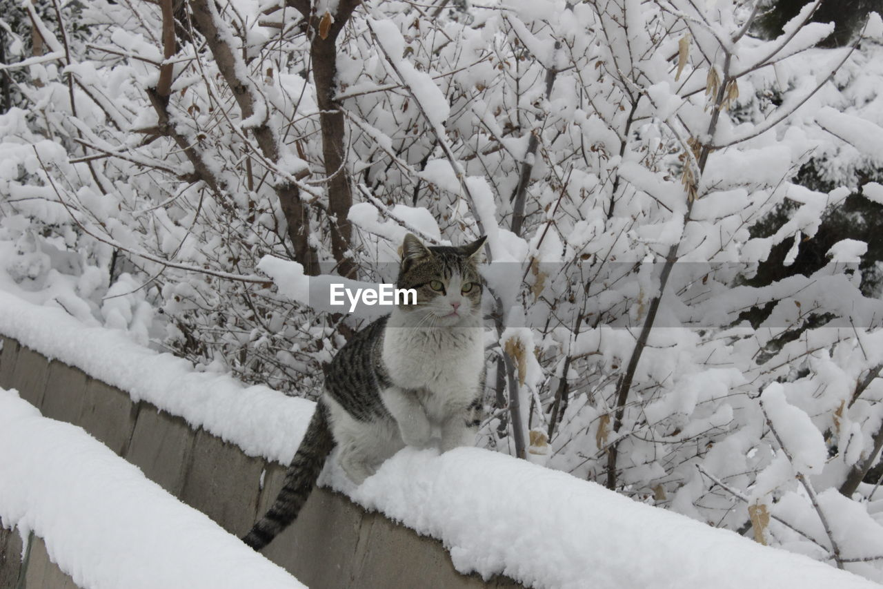 Cat On Snow Covered Retaining Wall