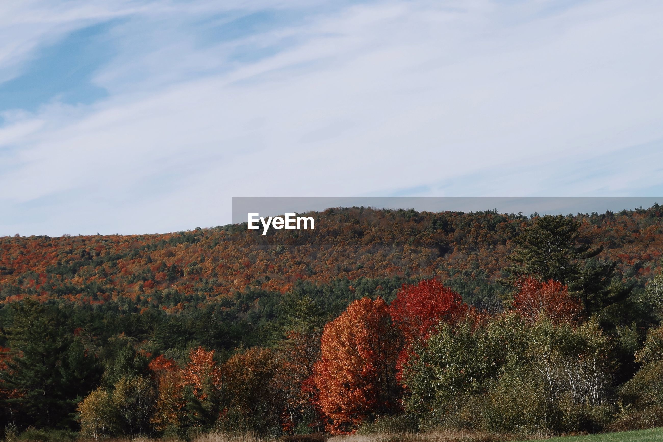 Plants growing on land against sky during autumn