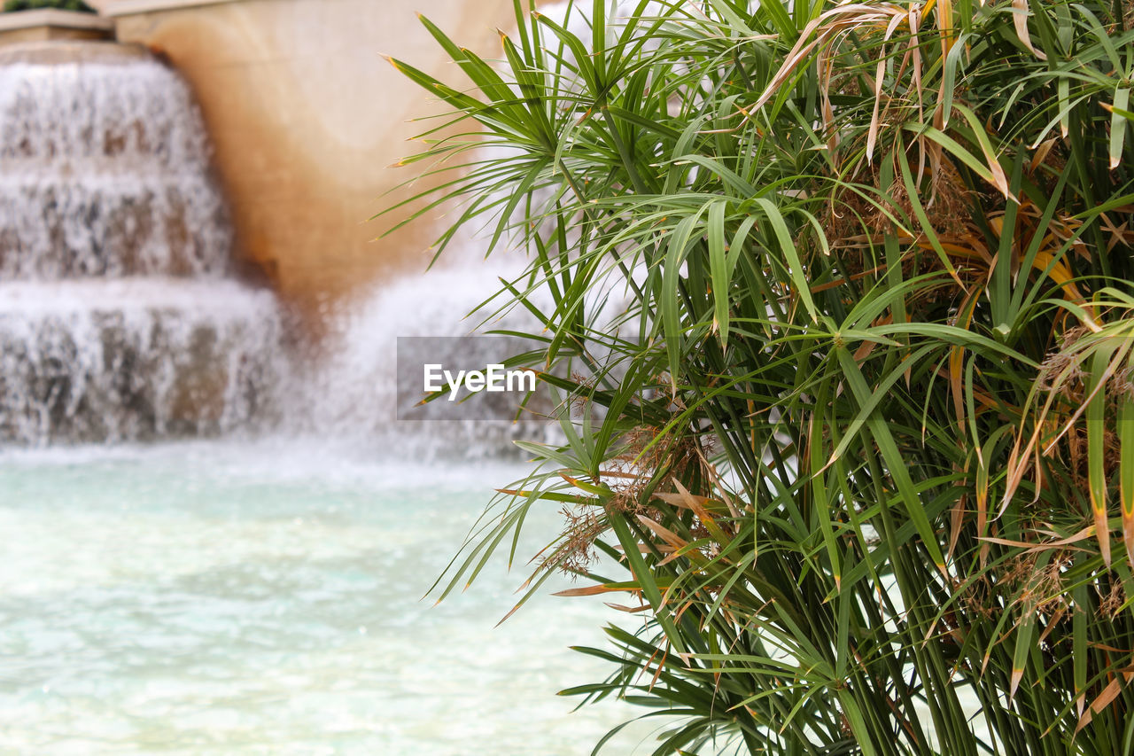 water, motion, plant, nature, no people, beauty in nature, growth, sea, green color, focus on foreground, day, outdoors, waterfront, close-up, splashing, leaf, tree, long exposure, plant part, flowing water, power in nature, flowing, falling water