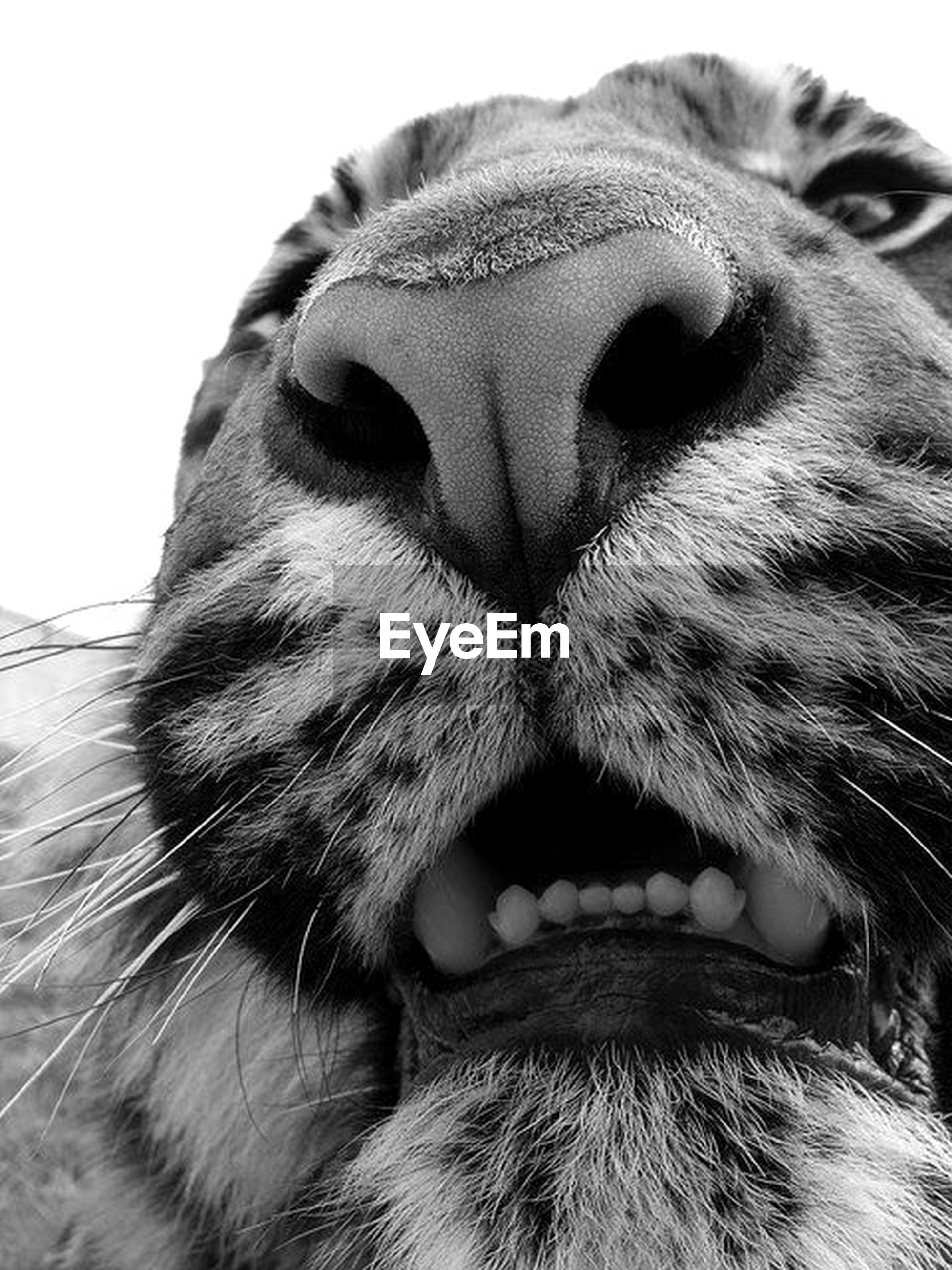 one animal, animal themes, domestic animals, pets, mammal, animal head, close-up, animal body part, whisker, feline, focus on foreground, domestic cat, dog, looking away, cat, animal eye, animal nose, snout, no people, part of