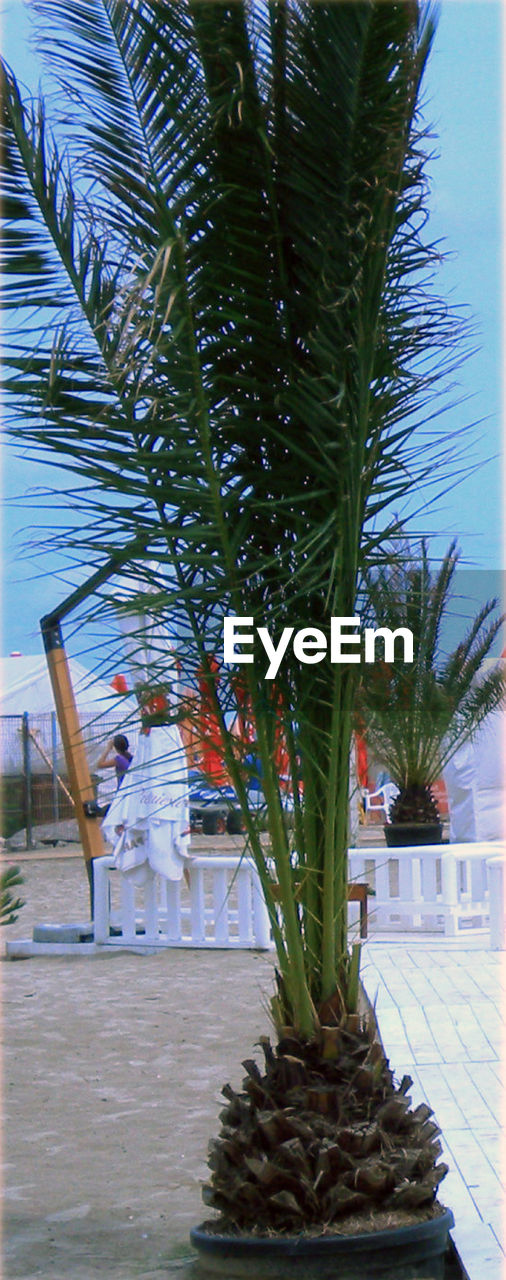 growth, tree, plant, nature, cactus, palm tree, day, no people, outdoors, beauty in nature