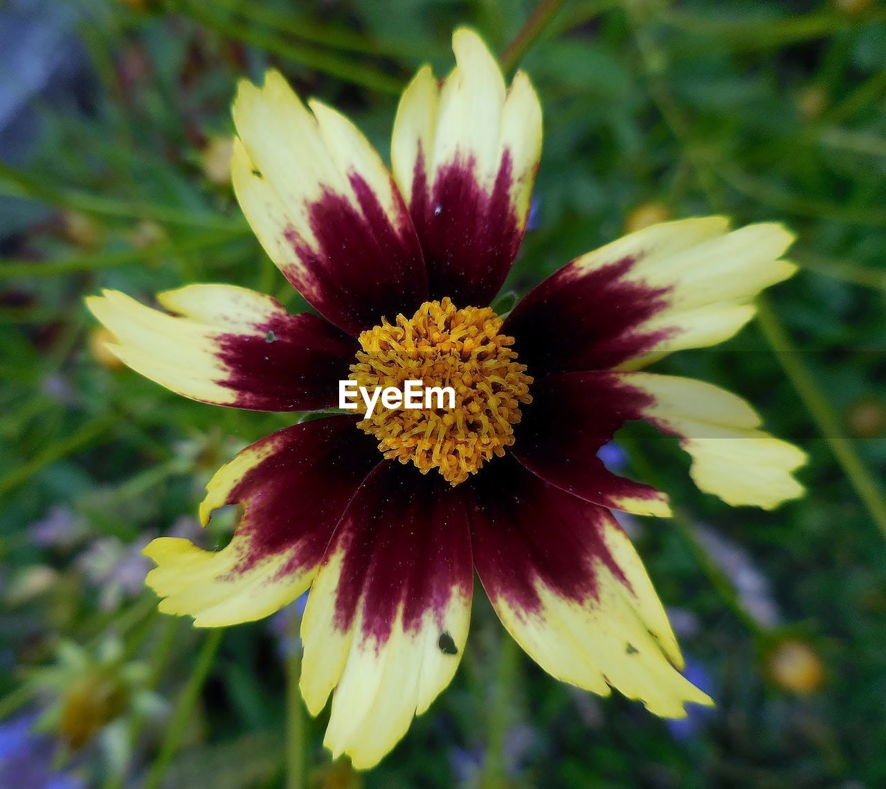 flower, fragility, petal, nature, growth, beauty in nature, flower head, plant, freshness, close-up, yellow, red, outdoors, no people, day, blooming, soft focus