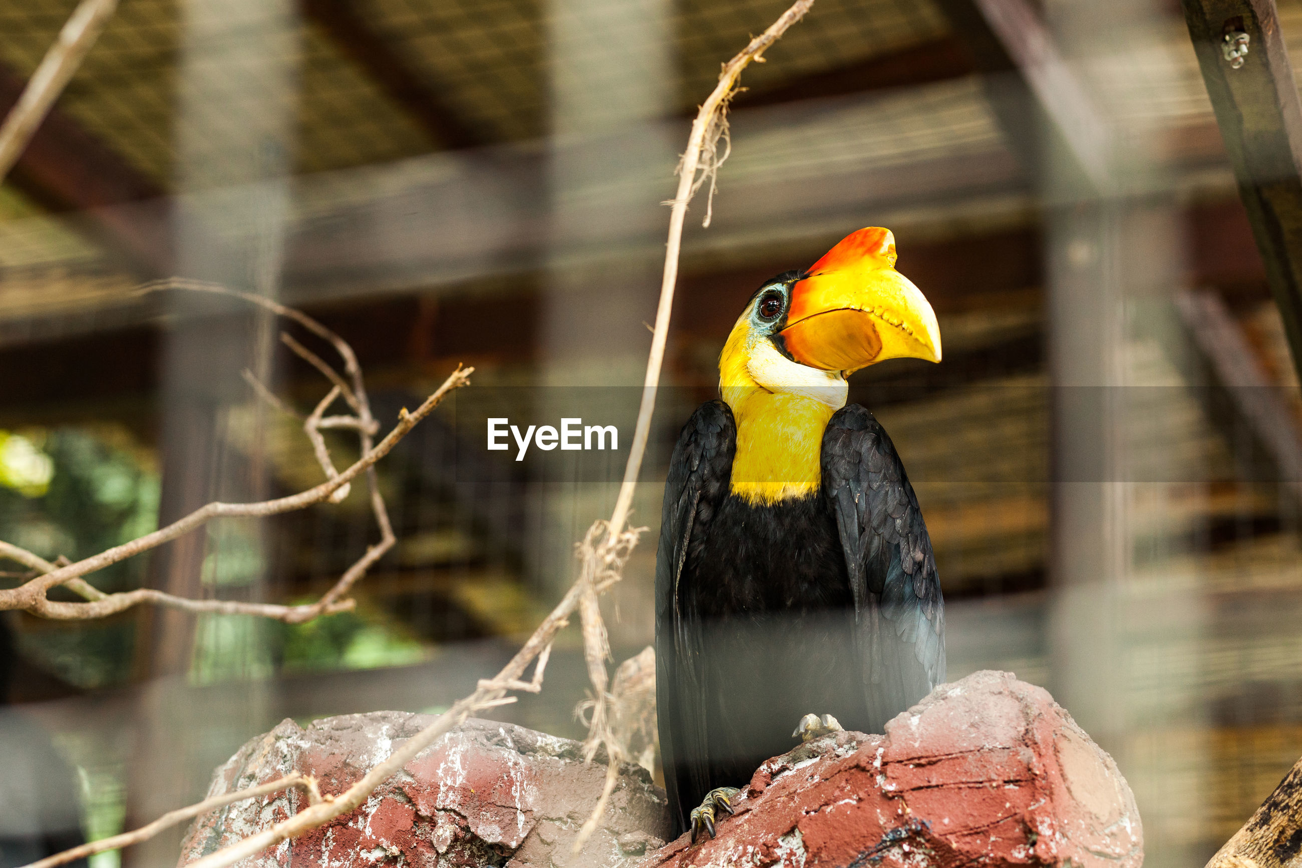 CLOSE-UP OF BIRD PERCHING IN CAGE AT ZOO