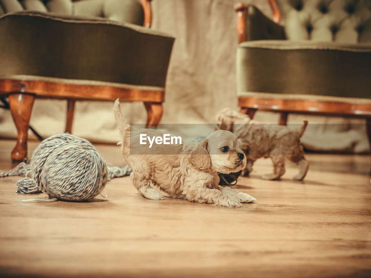 mammal, animal, animal themes, domestic, domestic animals, pets, indoors, wood - material, table, no people, vertebrate, selective focus, group of animals, relaxation, dog, canine, feline, cat, seat