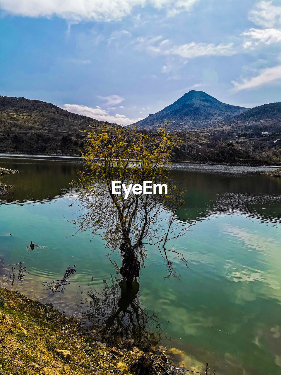 mountain, water, lake, reflection, scenics - nature, beauty in nature, sky, tranquility, tranquil scene, cloud - sky, nature, non-urban scene, day, tree, no people, plant, idyllic, landscape, mountain range, outdoors