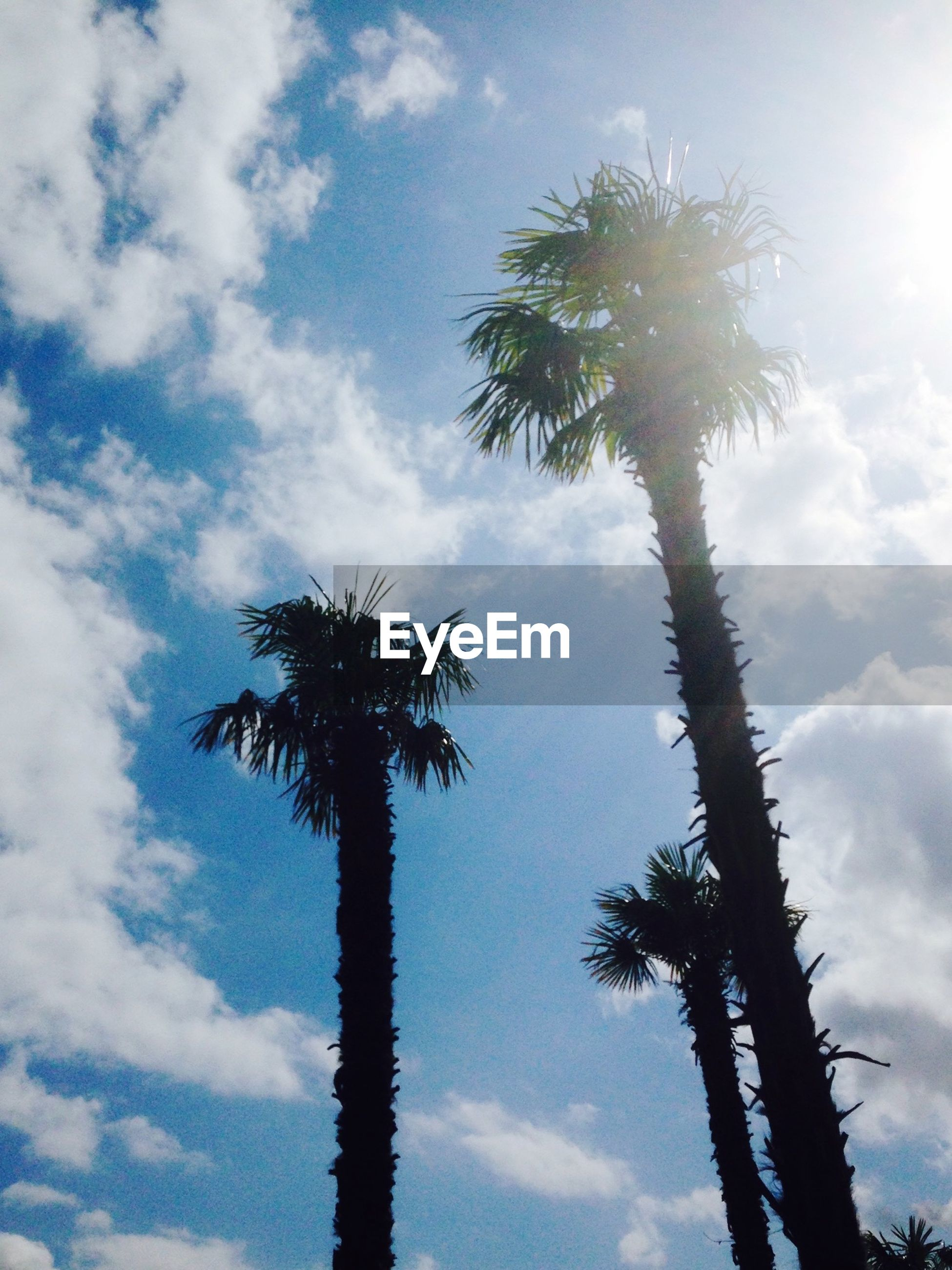 palm tree, low angle view, tree, sky, silhouette, tranquility, tree trunk, growth, nature, beauty in nature, cloud - sky, scenics, sun, tranquil scene, tall - high, sunlight, cloud, coconut palm tree, sunbeam, outdoors