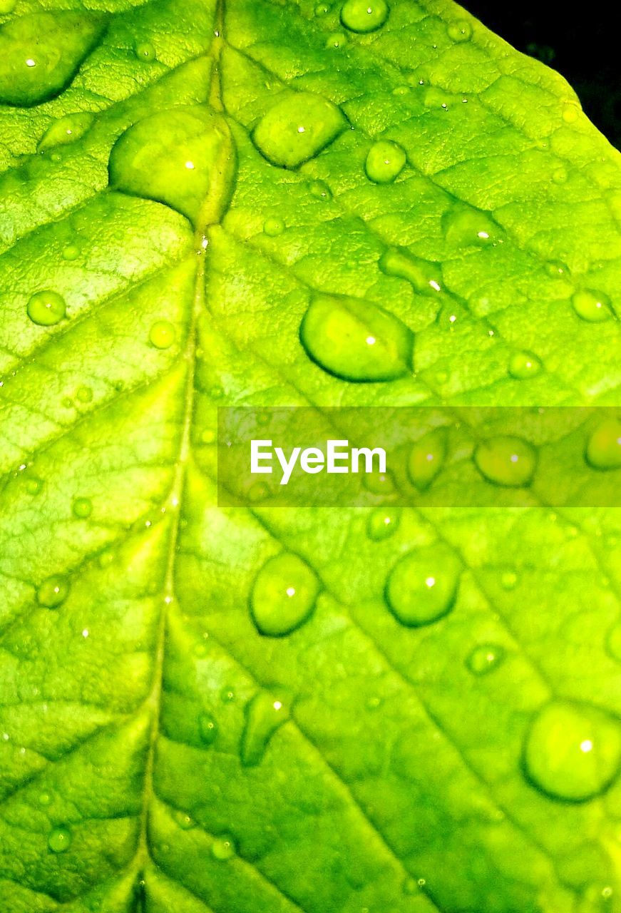 drop, leaf, green color, backgrounds, freshness, wet, water, close-up, full frame, raindrop, nature, no people, textured, growth, fragility, day, outdoors