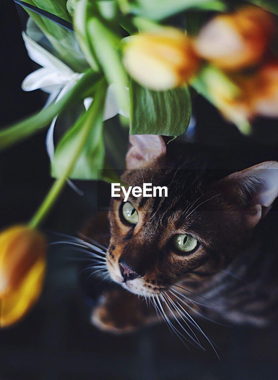 Close-Up Portrait Of Cat By Vase