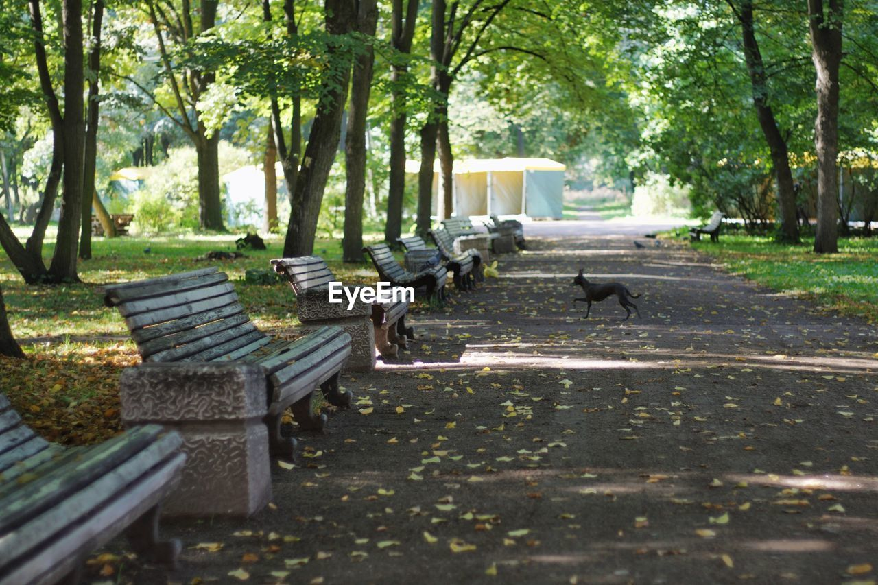 tree, plant, bird, animal themes, group of animals, nature, animal, animals in the wild, day, no people, park, vertebrate, animal wildlife, water, park - man made space, seat, trunk, tree trunk, bench, outdoors, park bench