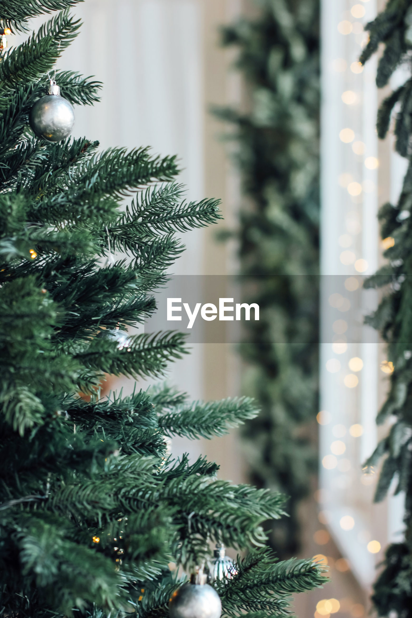 Close-up of christmas trees