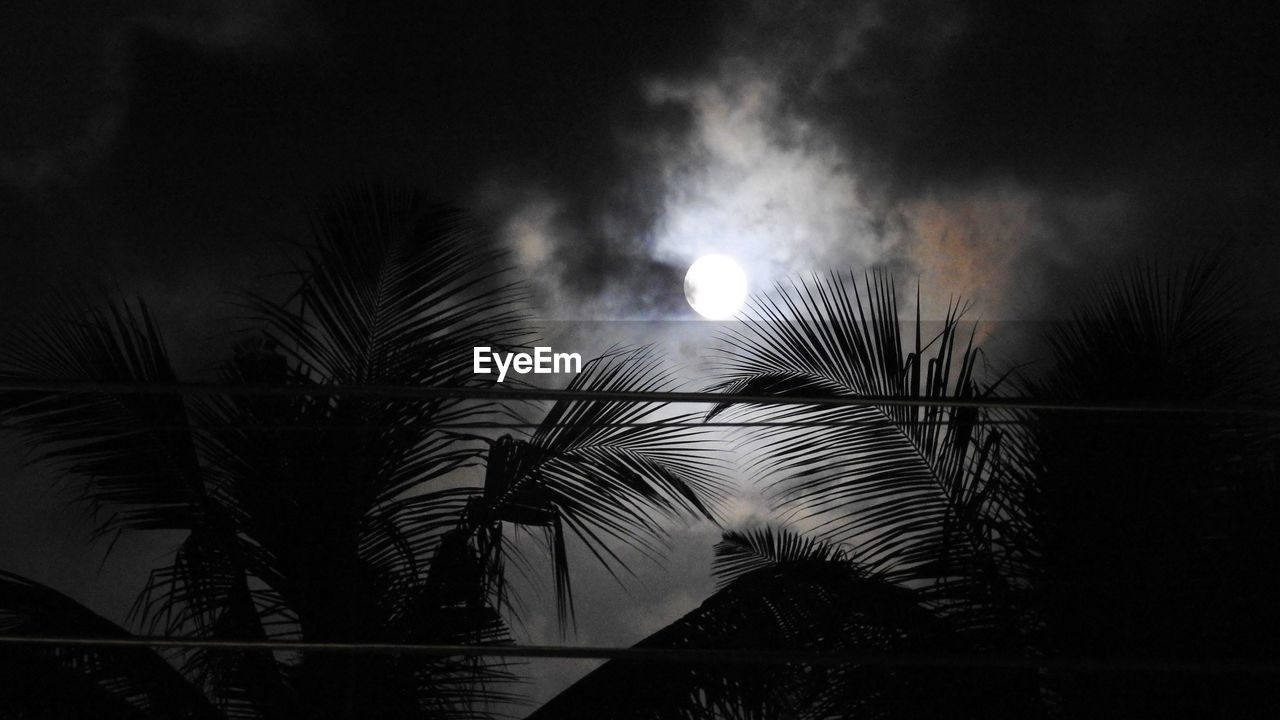 night, palm tree, sky, low angle view, no people, outdoors, nature, tree, beauty in nature