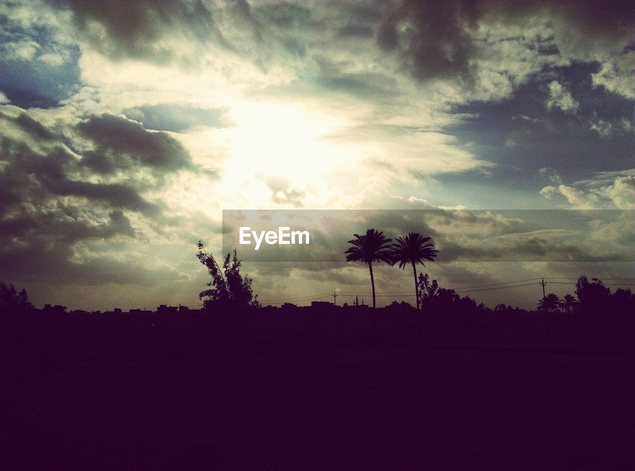 tree, silhouette, sky, nature, palm tree, beauty in nature, no people, landscape, tranquility, growth, outdoors, scenics, day