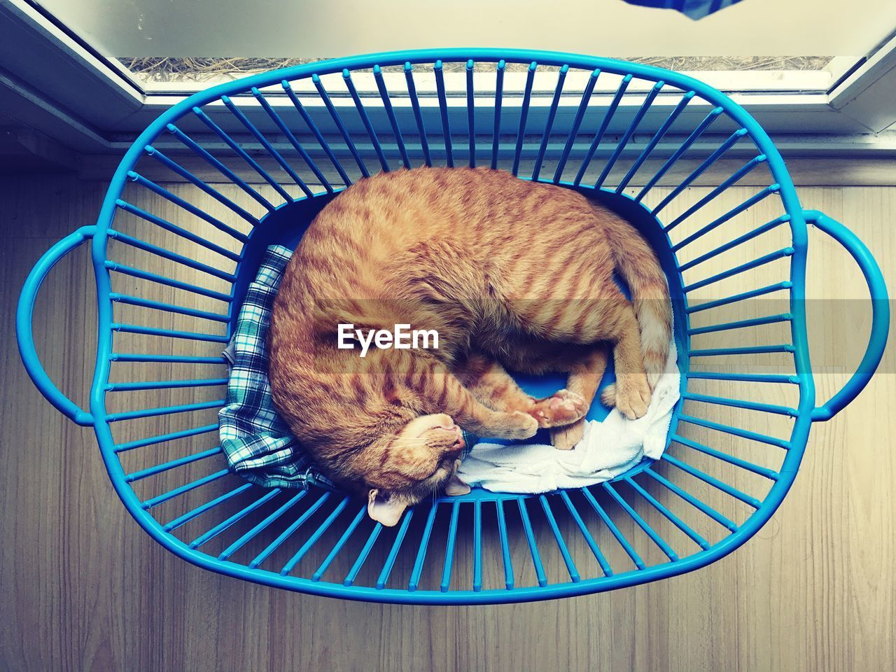 High angle view of cat sleeping in basket