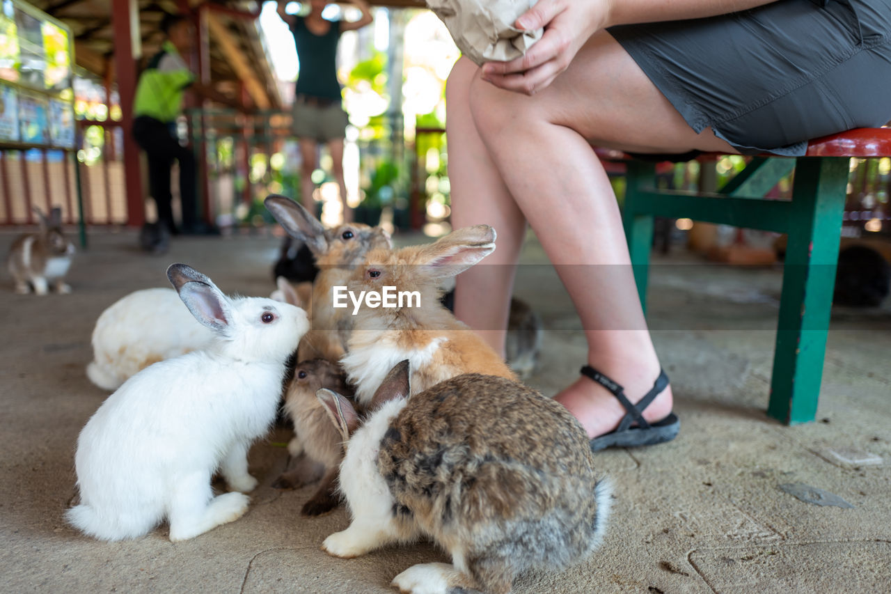 mammal, real people, vertebrate, domestic animals, one person, pets, domestic, low section, sitting, human leg, women, lifestyles, human body part, focus on foreground, adult, group of animals, body part, hand, human foot