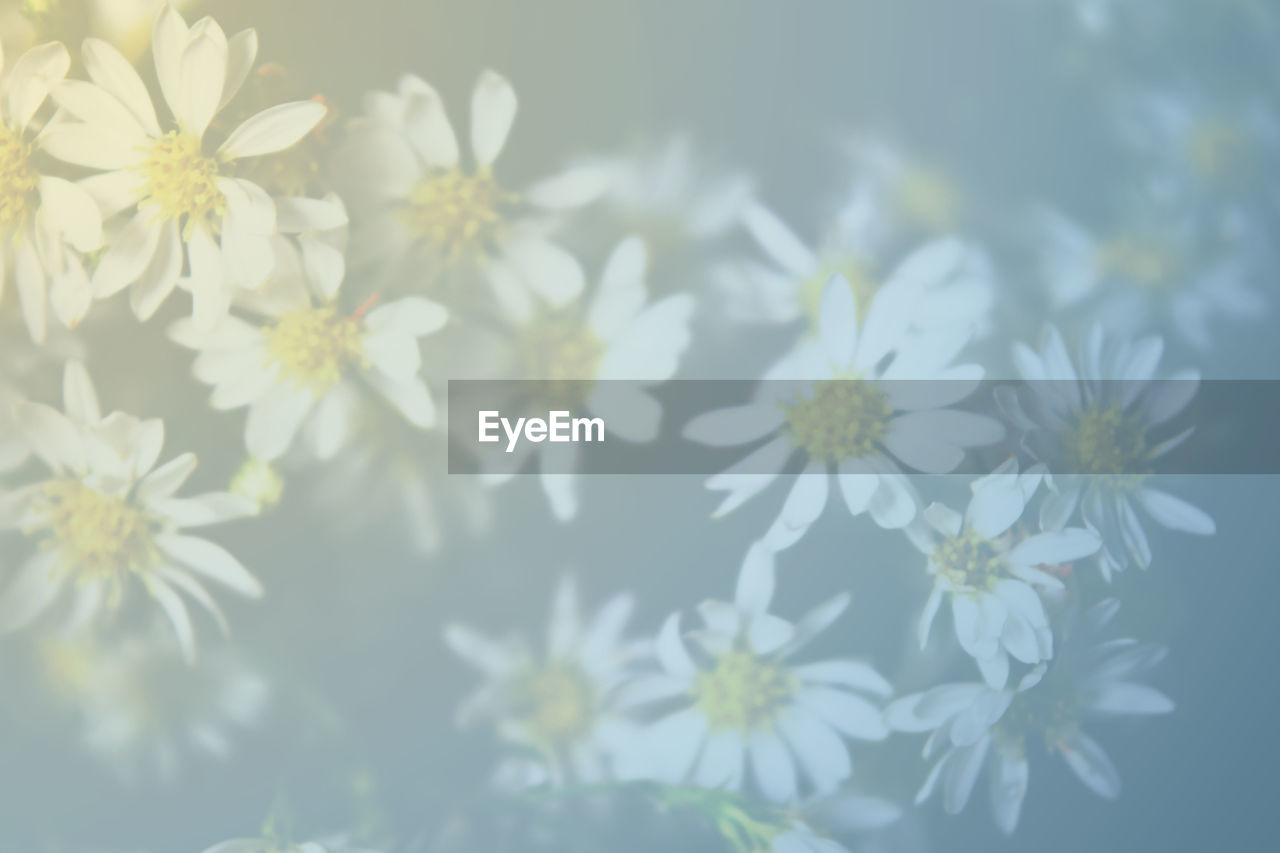 flower, nature, fragility, beauty in nature, growth, plant, petal, no people, freshness, day, outdoors, blooming, close-up, flower head