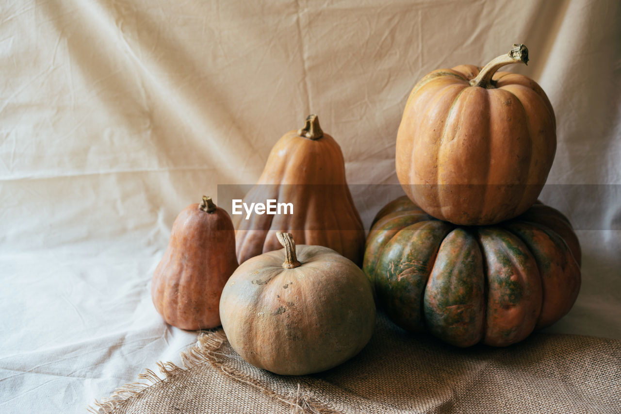 A simple still life with autumn pumpkins on bright draperies. place for text.