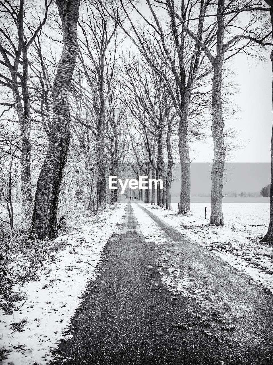 SNOW COVERED ROAD ALONG BARE TREES