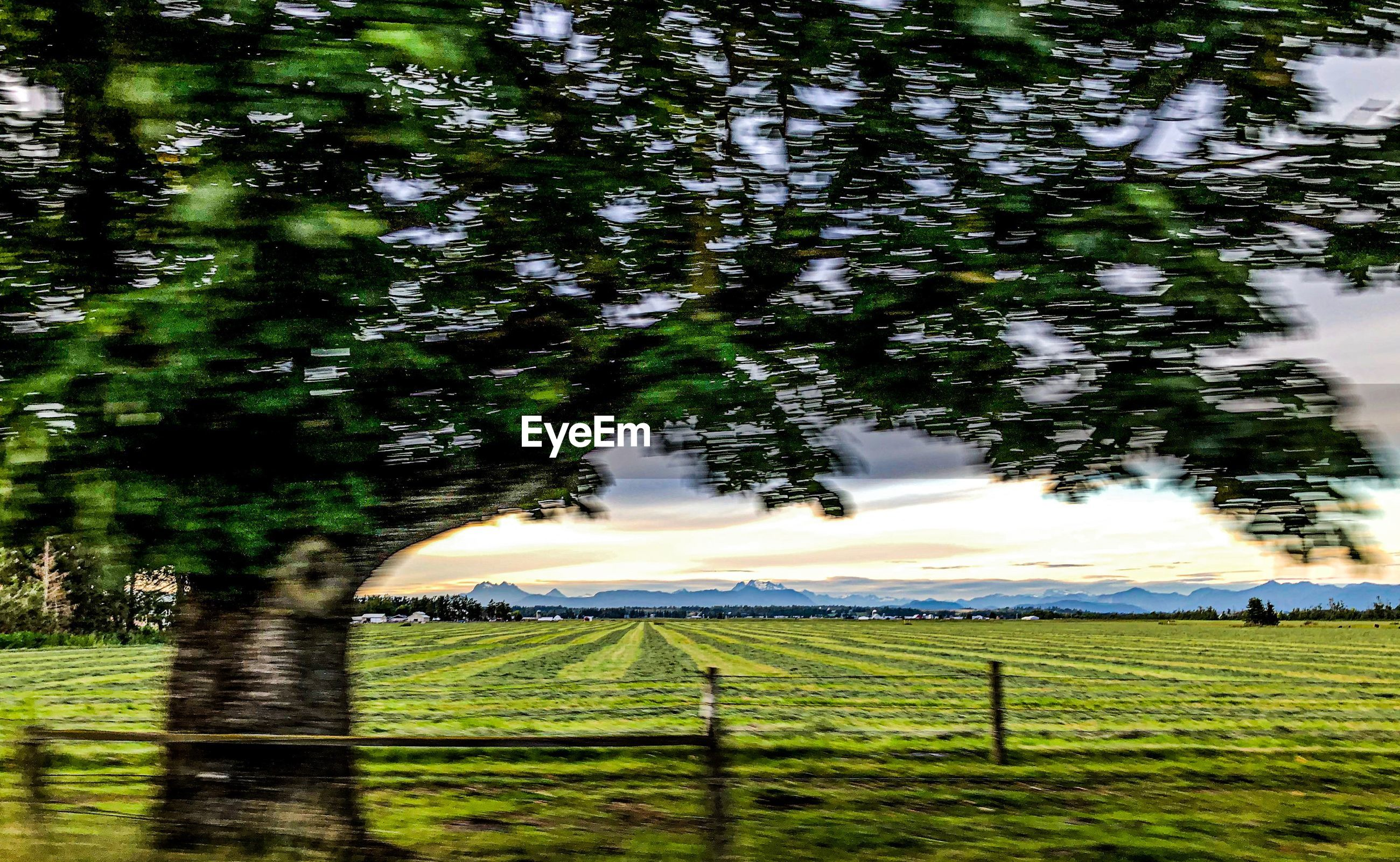 plant, tree, land, green color, beauty in nature, nature, growth, field, tranquility, no people, tranquil scene, day, landscape, environment, scenics - nature, grass, sky, barrier, outdoors, fence
