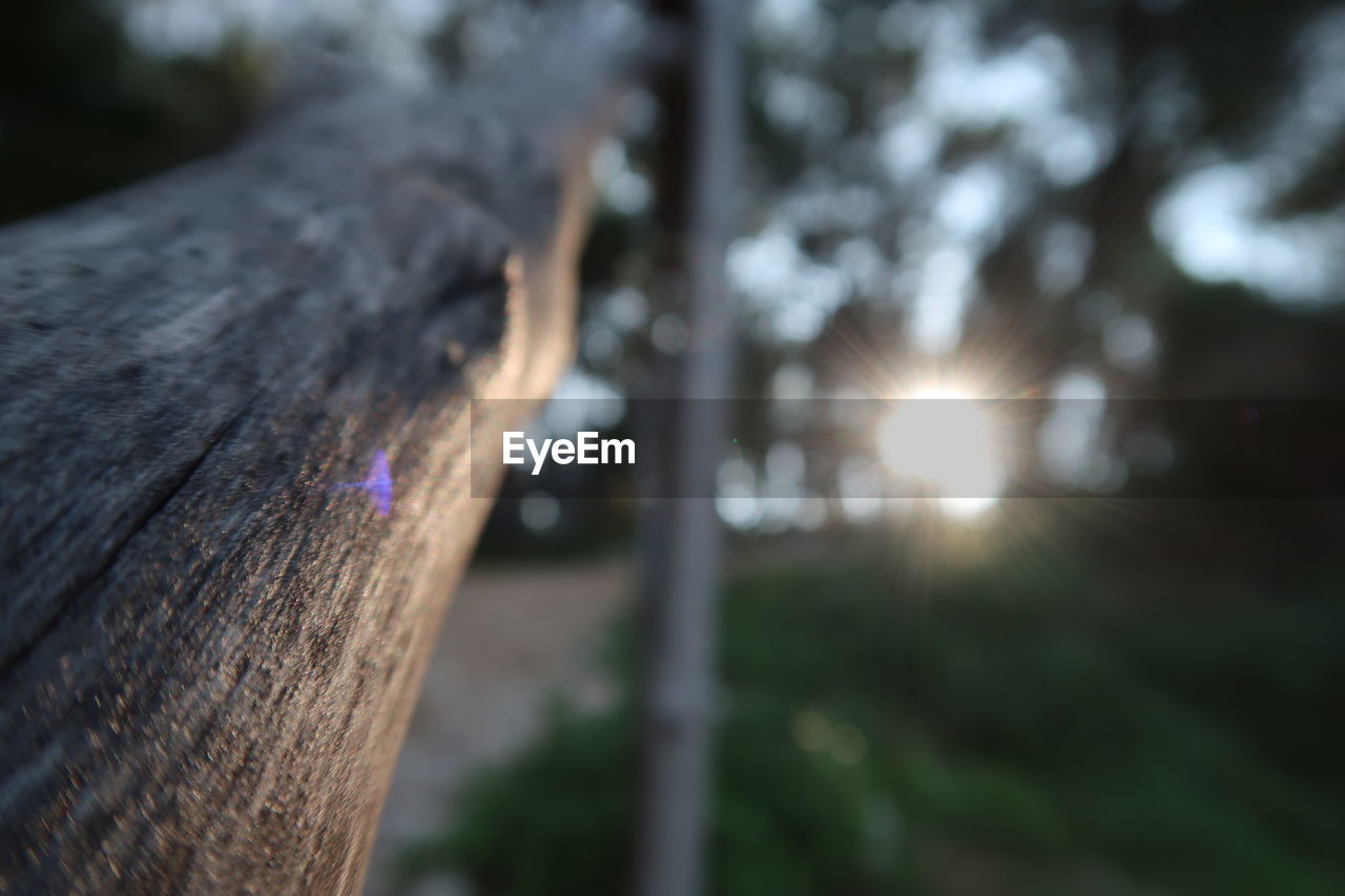 tree, wood - material, tree trunk, lens flare, sunlight, trunk, nature, plant, close-up, day, no people, focus on foreground, selective focus, outdoors, textured, sun, sunbeam, sky, wood, land, bark
