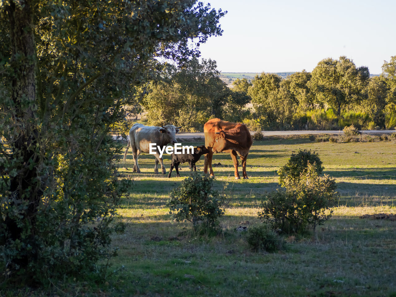 HORSES STANDING IN THE FIELD