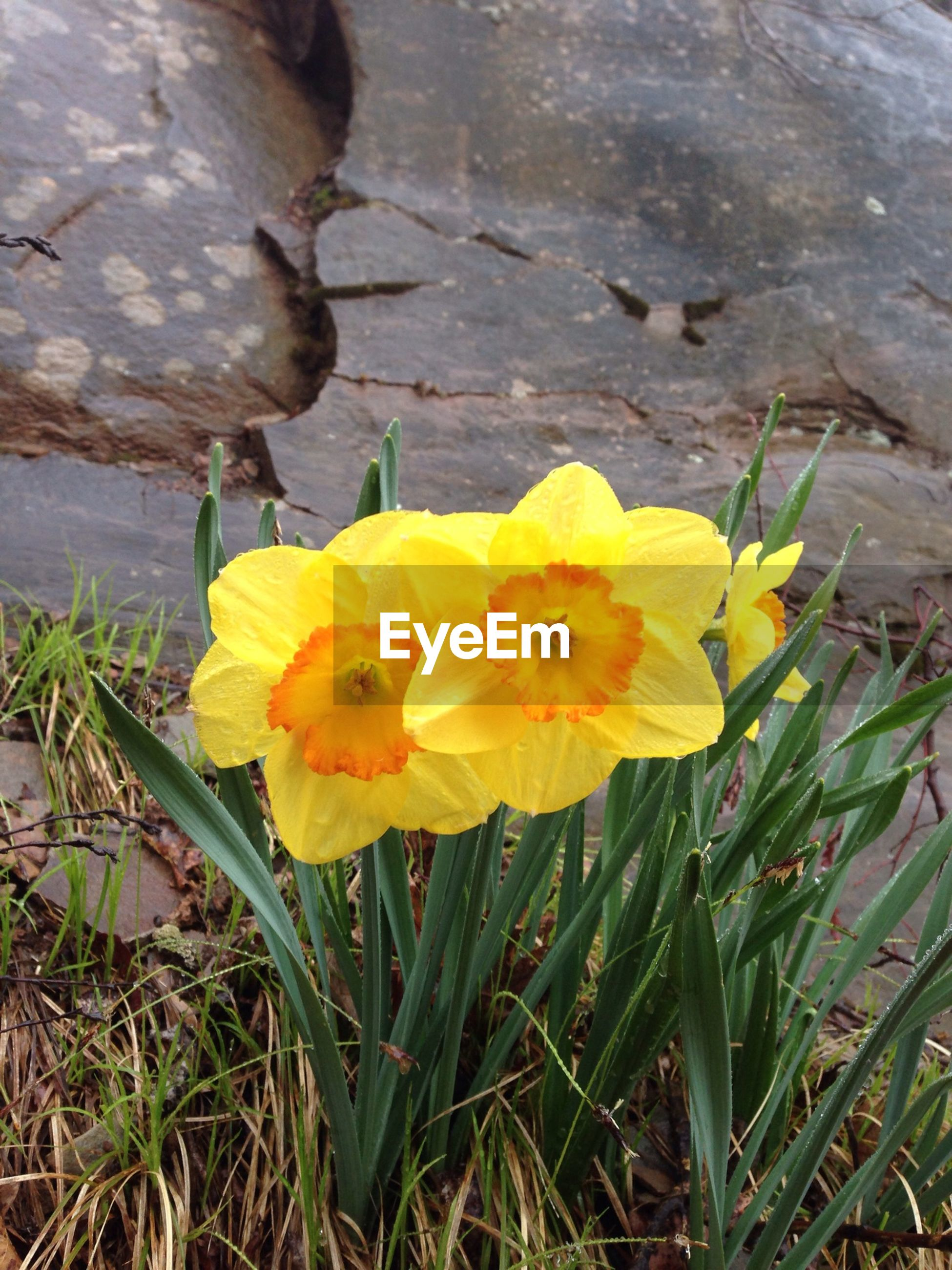 flower, petal, yellow, fragility, flower head, freshness, beauty in nature, growth, blooming, nature, plant, single flower, high angle view, close-up, in bloom, leaf, pollen, day, stem, no people