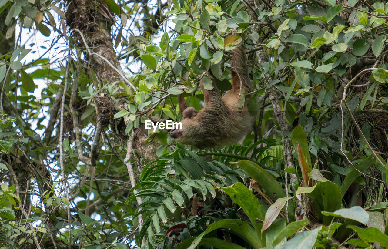 one animal, animal themes, animal, mammal, plant part, leaf, plant, tree, vertebrate, animal wildlife, animals in the wild, green color, branch, nature, no people, growth, day, outdoors, rodent, low angle view