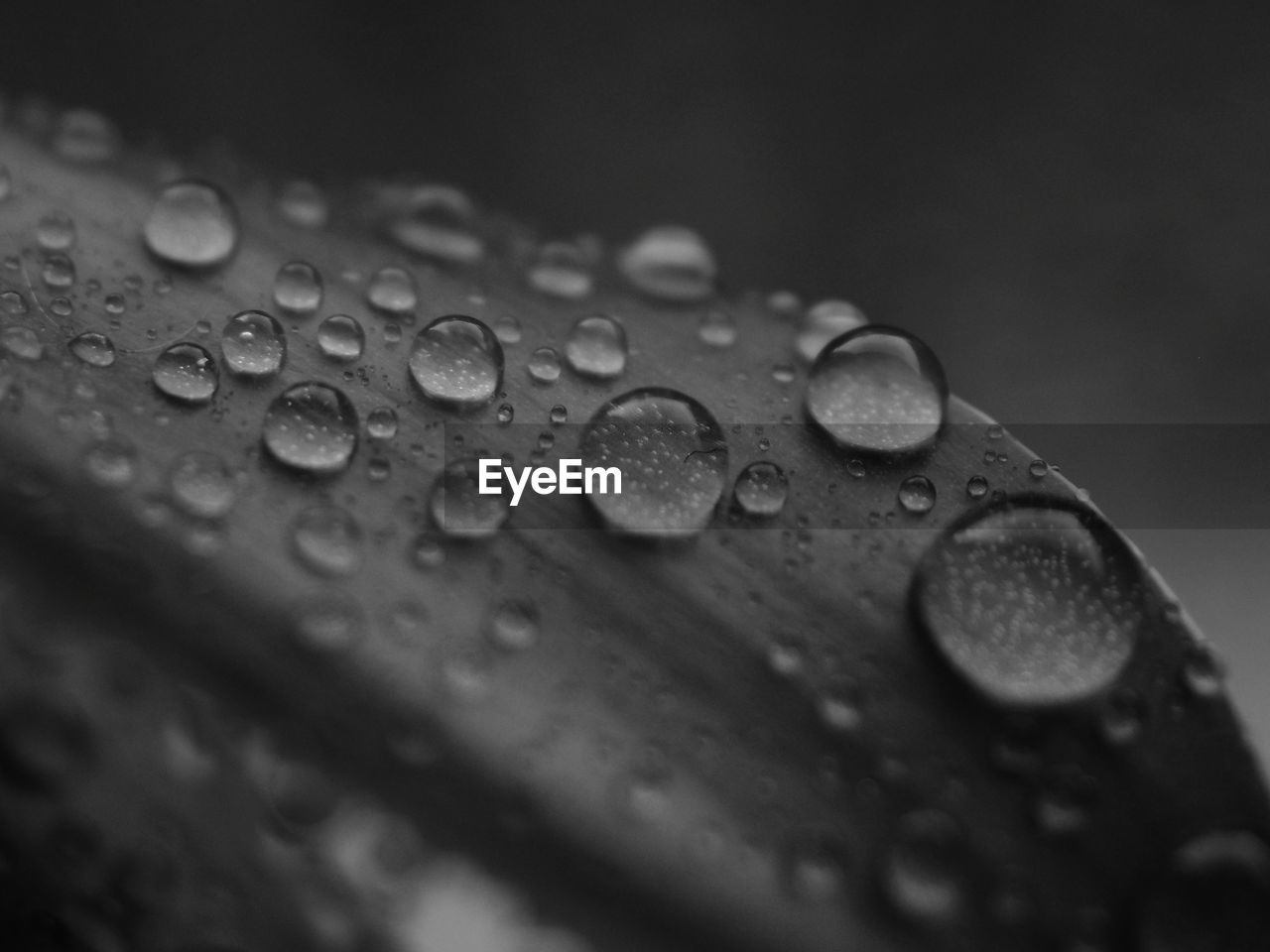 drop, wet, close-up, no people, selective focus, water, rain, raindrop, nature, pattern, outdoors, day, rainy season, plant part, monsoon, leaf, backgrounds, vulnerability, purity, dew