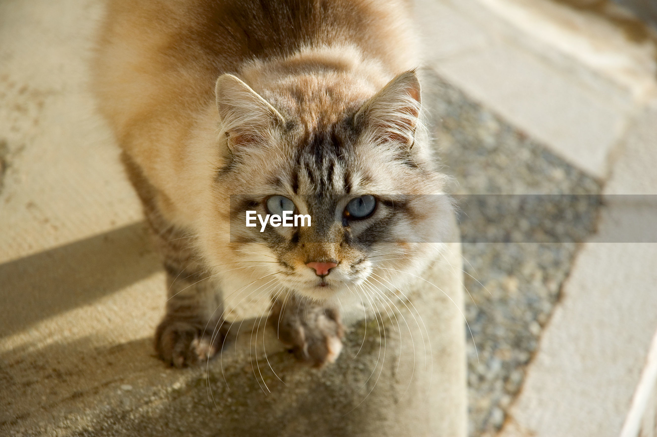 HIGH ANGLE VIEW PORTRAIT OF CAT BY WALL OUTDOORS